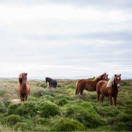 Frauen in Führungspositionen können zum Beispiel von Pferden lernen